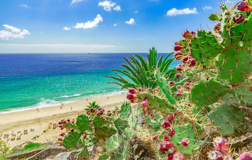 Esquinzo, Fuerteventura, Canary Islands surfing spot