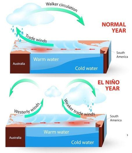 Upward and downward air flows during El Niño. Upward air flows are connected with high humidity and rainfall, and downward - with dry air